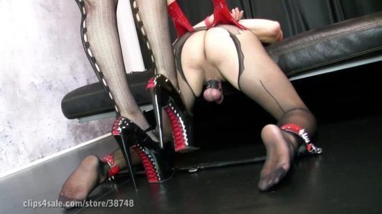MySlaveHdFemdomVideos - My Slave - Milking My Sissy Slut (FullHD/1080p/337 MB)