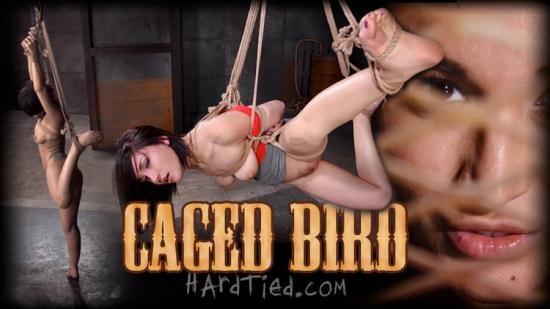 HardTied - Gabriella Paltrova - Caged Bird (HD/720p/2.07 GB)
